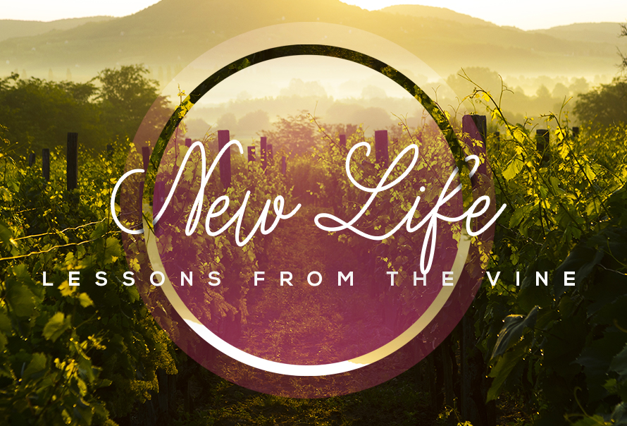 Lessons From The Vine